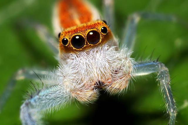 Arañas en fotos