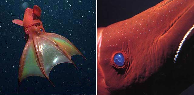 Vampyroteuthis, Vampire Squid from Hell, Planet Earth, Sigourney Weaver,