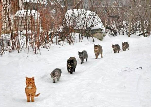 Cats Ready to Kill You Seen On www.coolpicturegallery.us