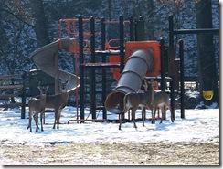 Deer_Herd_in_Playground