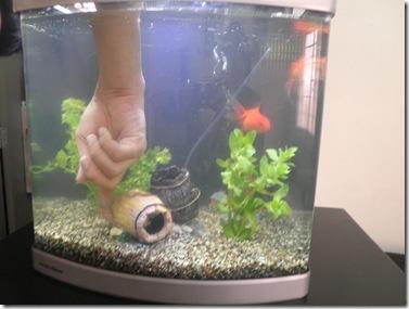 akuarium baru 5