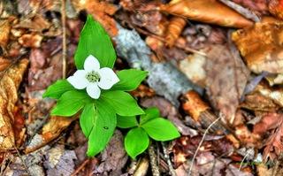 Wild-Flower2