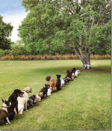 Os males do desmatamento