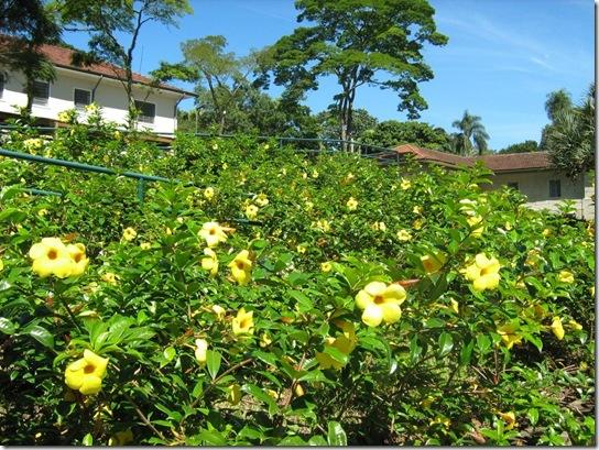 2010-04-18 Jardim Botânico 41