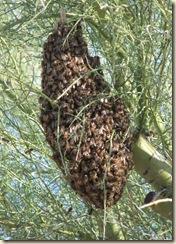 full swarm cu2-17-2010 4-17-25 PM 3616x2712 2-17-2010 4-17-25 PM 1878x2622