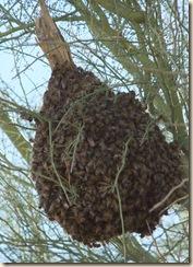 half swarm 2-23-2010 9-53-09 AM 3616x2712