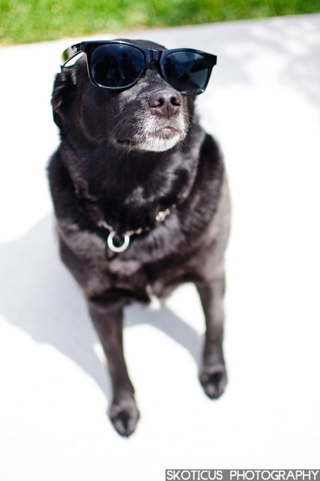 Dog with sunglasses Utah Family Photography