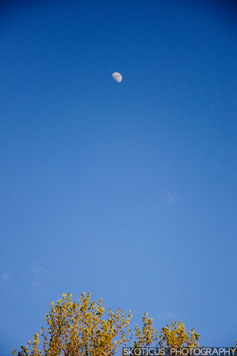 Moon and tree nature photography