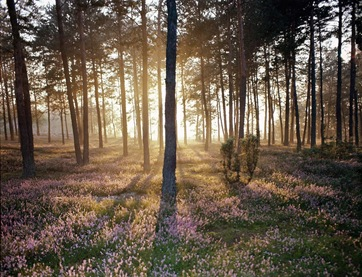 Sunlight_and_the_Wild_Forest_Floor