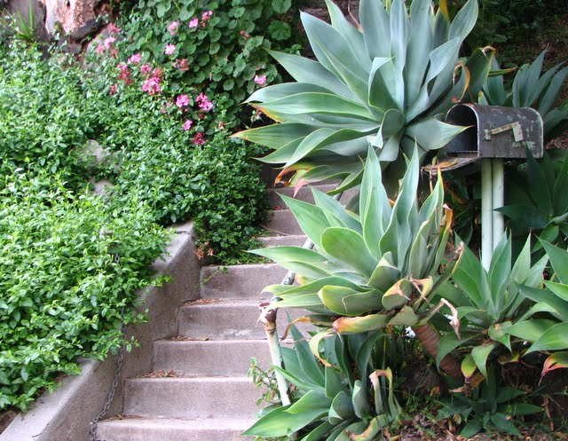 Steps, agave and mailbox on Vestal. Echo Park.