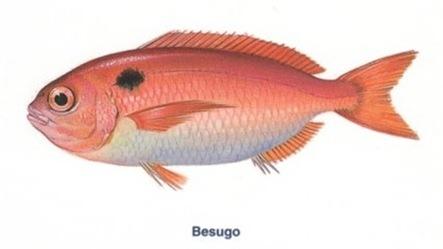 besugo_thumb[5]