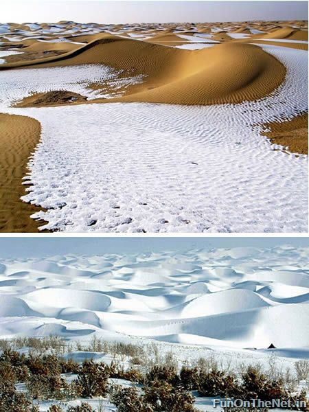 Captivating Deserts