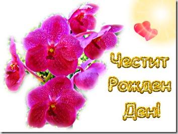 4RD_lilavi_orhidei