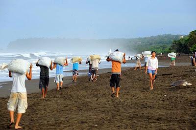 People Carrying Sea Turtles Eggs