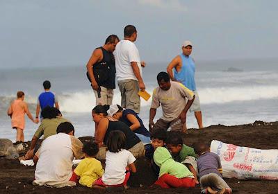 Childern Finding Sea Turtles Eggs On Beach