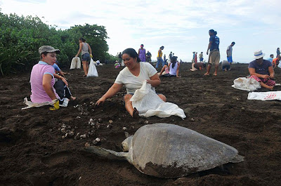 Women Collecting Sea Turtles Eggs
