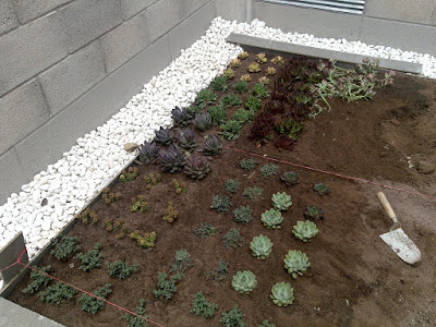 cubierta vegetal con plantas crasas