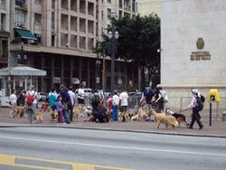 Cãonhecendo São Paulo (57)