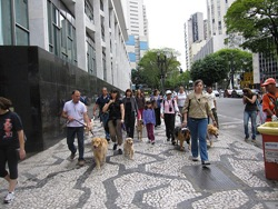 Cãonhecendo São Paulo (171)