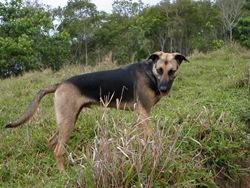 Dogs Trekking 3 (110)