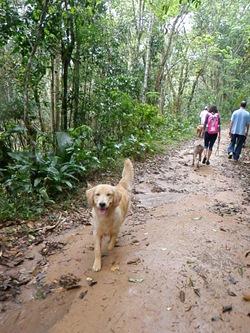 Dogs Trekking 3 (91)