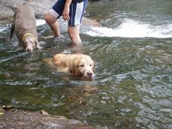 Dogs Trekking 3 (213)
