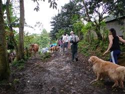 Dogs Trekking 3 (158)