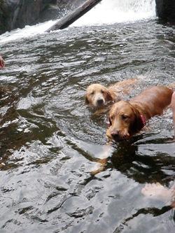 Dogs Trekking 3 (211)