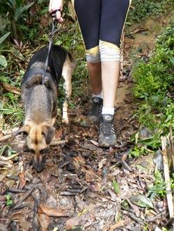 Dogs Trekking 3 (340)