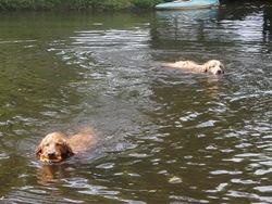Dogs Trekking 3 (410)