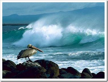 11_ocean_waves