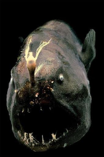 ikan yang menyeramkan