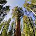 World's Biggest Trees