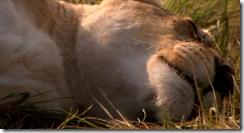 White Lion (2010)1