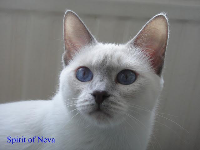 Berenika Unona Stars of Neva