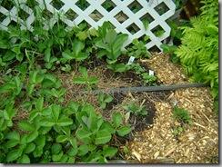 gardenupdate 035