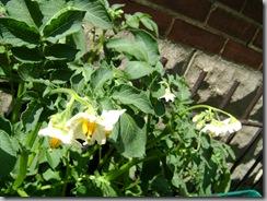 garden 022