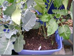 sub-i planter SIP #1