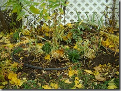 garden fall 008