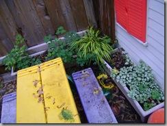 plants 027