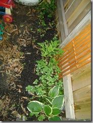 plants 028