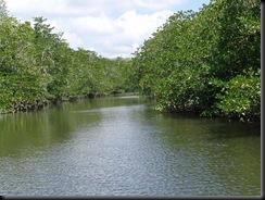 New  Ibajay mangrove