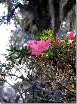 florida winter reprised 005