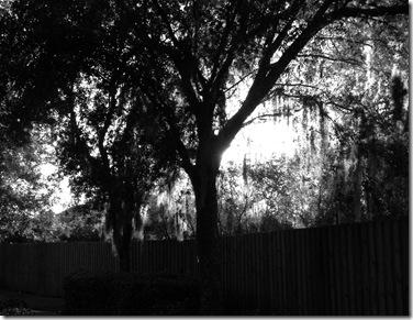 Old Sugar Mill and Florida Fall 072