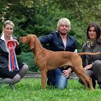 CELJE EUROPEAN DOG SHOW-SLOVENIA-2010-10-01b.jpg