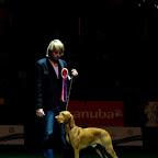 CELJE EUROPEAN DOG SHOW-SLOVENIA-2010-10-01d.jpg