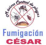 Fumigación César