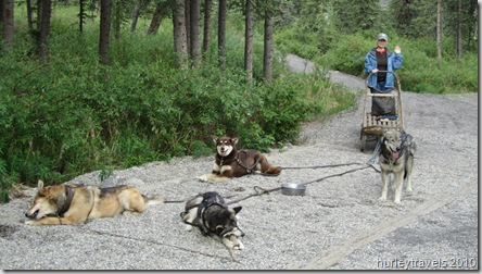 Denali's mushers ready to Gee and Haw with Nancy