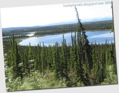 Bottle brush spruce line the Alaska Highway between Tok and Kluane Lake.
