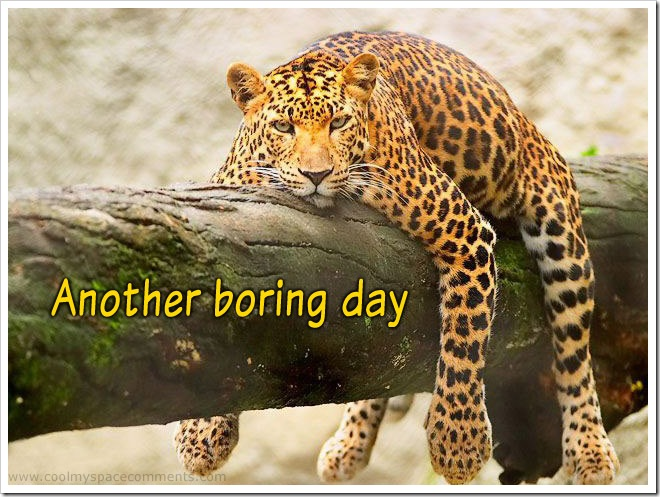 leopard-boring-day